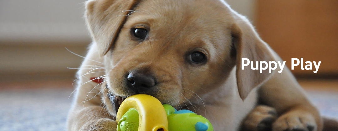 puppyplay